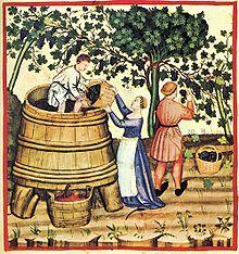 Ép rượu sau khi thu hoạch