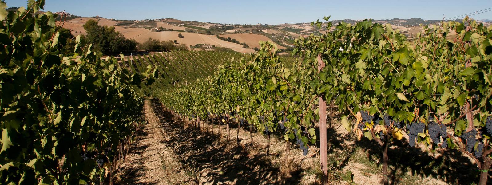 khu vực rượu vang montepulciano