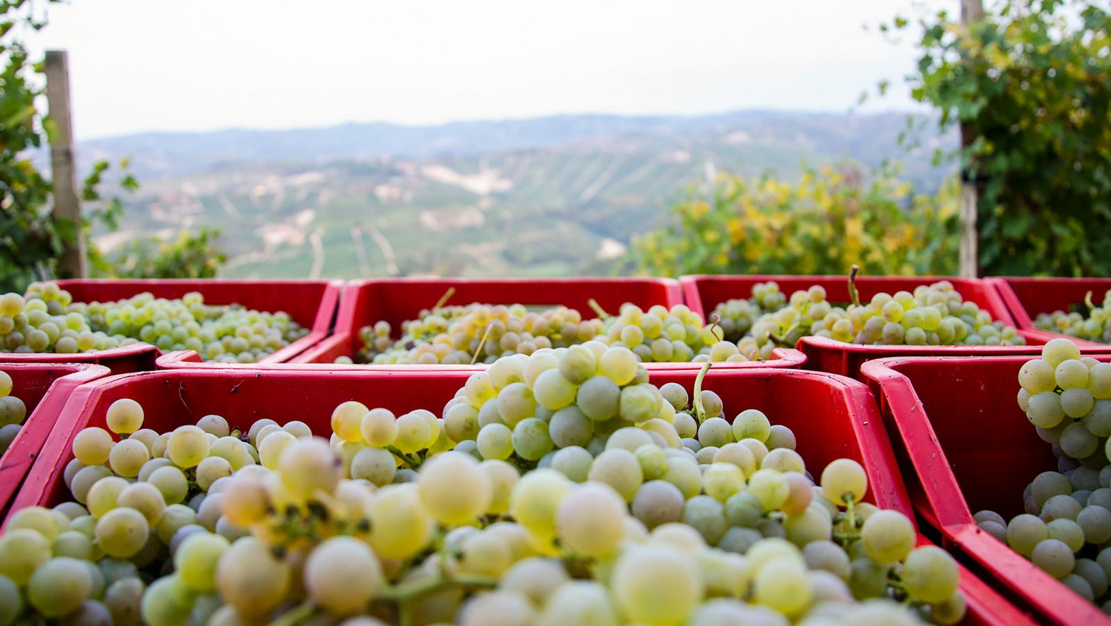 9 loại rượu vang trắng thông thường của Ý
