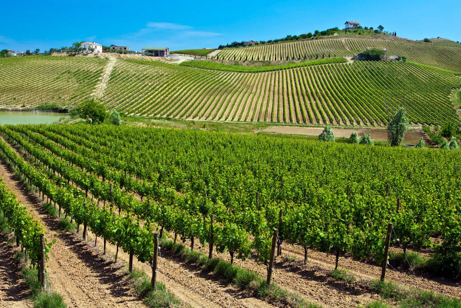 Rượu vang Abruzzo