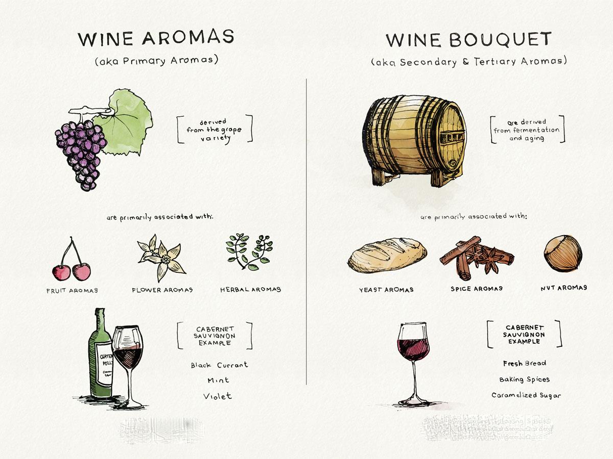 Mẹo phân biệt rượu vang bouquet và rượu vang Aroma khi nếm thử