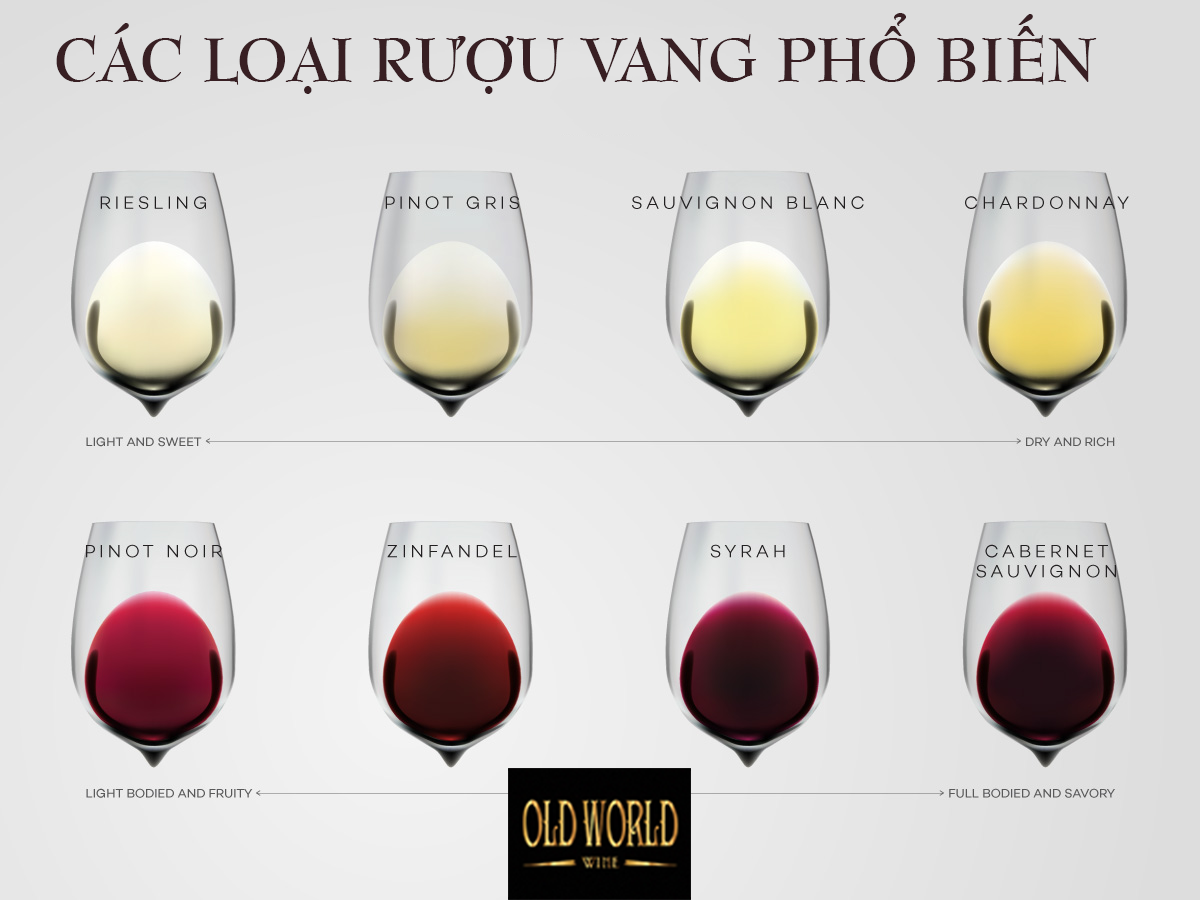 các loại rượu vang phổ biến