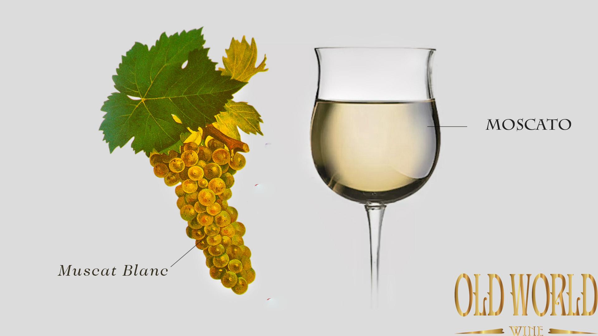 Tìm hiểu về rượu vang Moscato