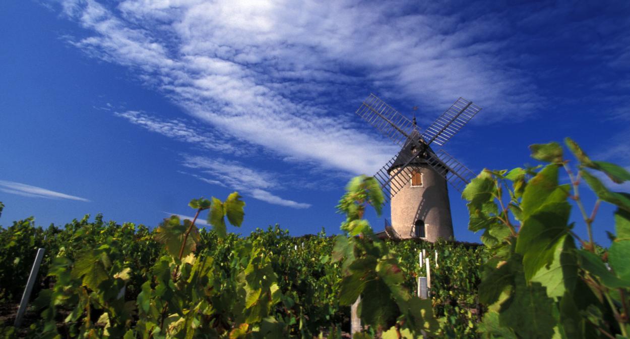 Beaujolais là gì? Bí quyết tìm rượu vang Beaujolais ngon