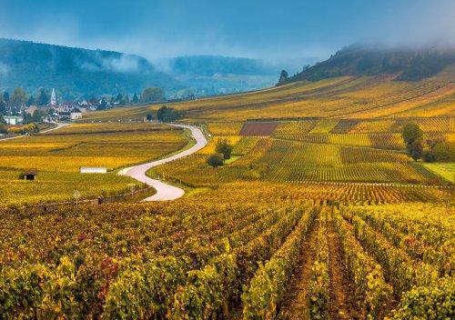 Rượu vang Burgundy là gì? Hướng dẫn đơn giản về rượu vang Burgundy