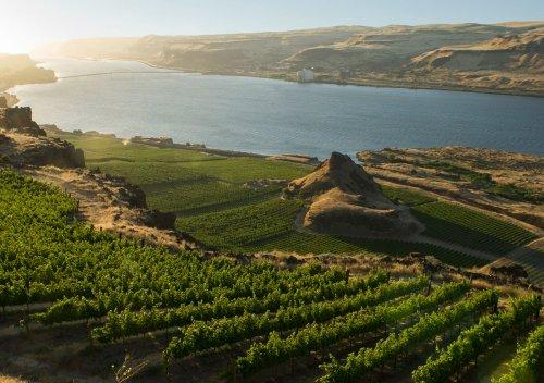 Columbia Valley AVA là gì? Thung lũng Columbia: Vùng rượu vang lớn nhất của Washington