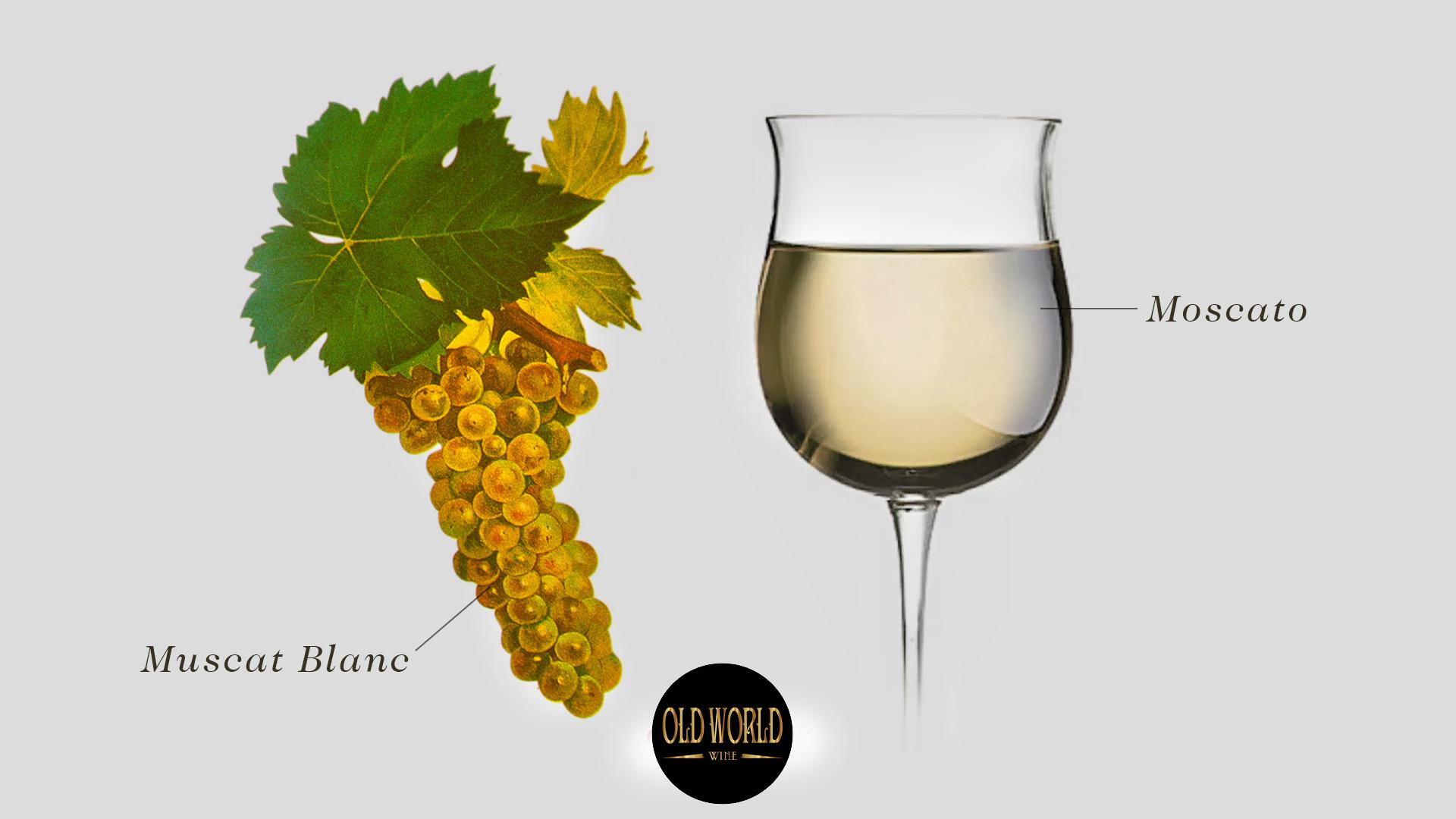 Nho Muscat là gì? Tìm hiểu về rượu vang Moscato và 5 kiểu chính
