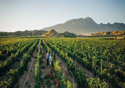 Rượu vang New Mexico là gì? Đường mòn rượu vang New Mexico
