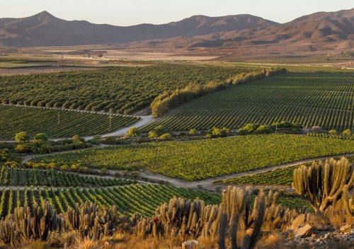 Tìm hiểu vùng rượu vang Thung lũng Limari, Chile