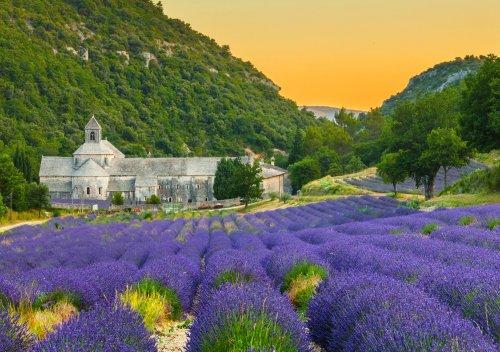 Rượu vang Provence là gì? Khám phá vùng rượu vang Provence