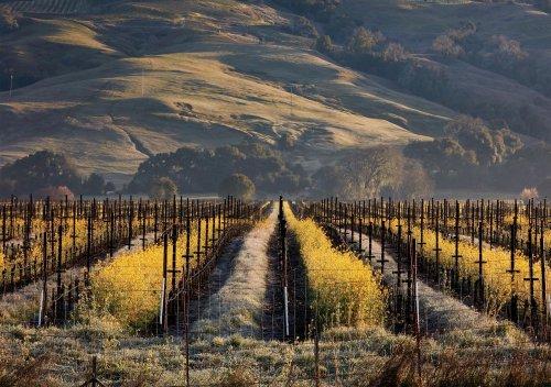Rượu vang Mendocino County là gì? Hướng dẫn cho người mới bắt đầu về rượu vang Mendocino County
