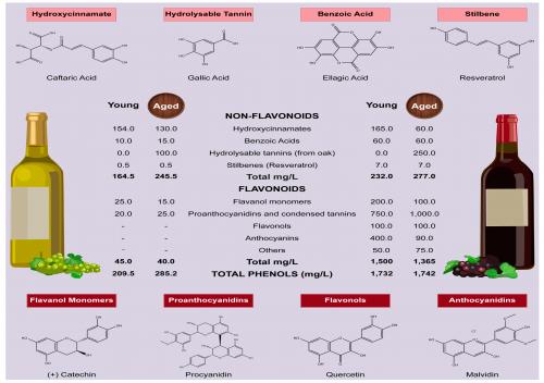 Polyphenol trong rượu vang là gì?