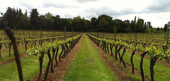 Thung lũng Bío Bío là gì? Khám phá vùng rượu vang Bío Bío của Chile
