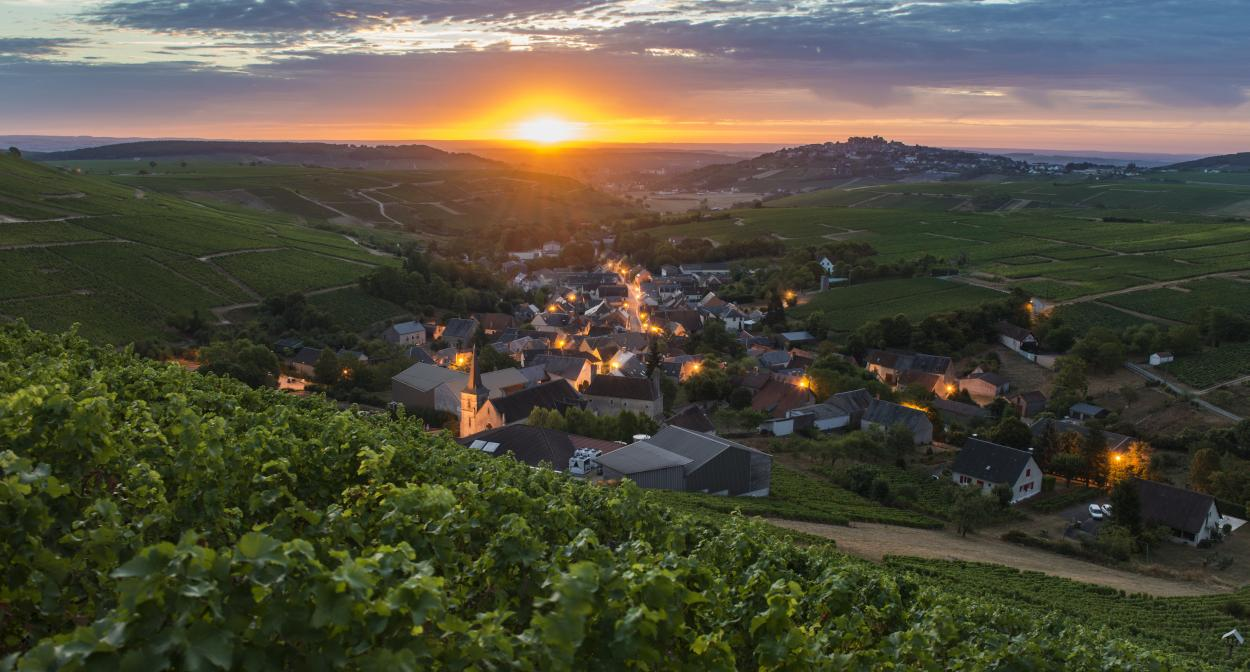 Rượu vang Sancerre là gì? Sancerre: Sauvignon Blanc tối thượng của Pháp?