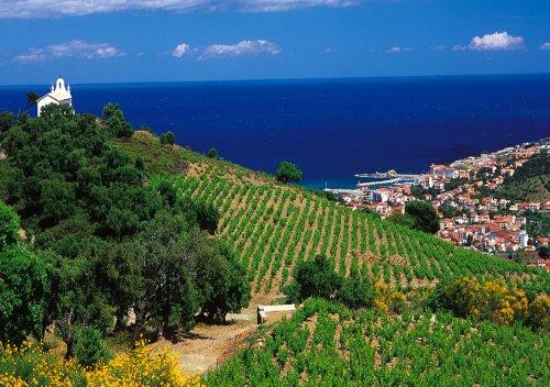 Rượu vang Languedoc-Roussillon là gì? Khám phá vùng rượu vang Languedoc Roussillon