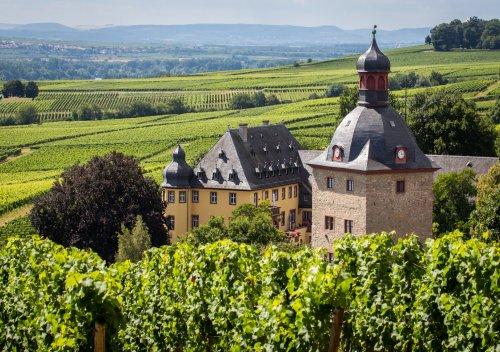 Rượu vang Đức là gì? Hướng dẫn về rượu vang trắng của Đức