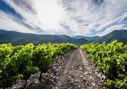 Rượu vang Limoux là gì? Tại sao bạn cần biết về rượu vang từ Limoux