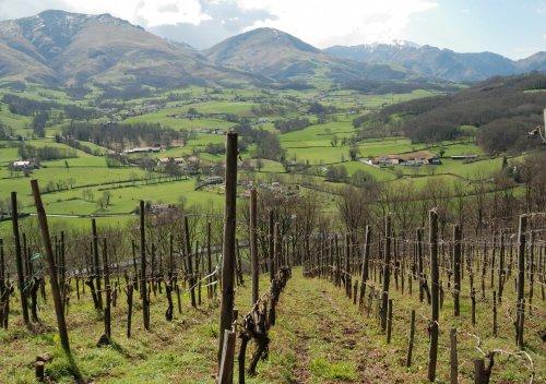 Rượu vang Madiran là gì? Madiran - Rượu vang đỏ từ Gascony