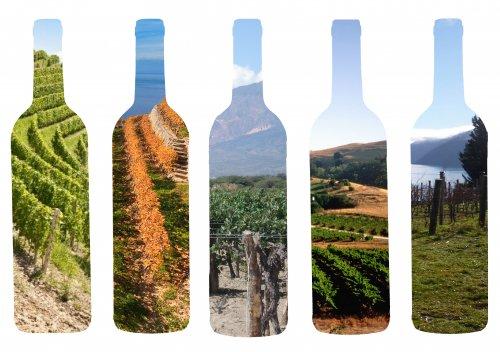 Định nghĩa Terroir cho rượu vang