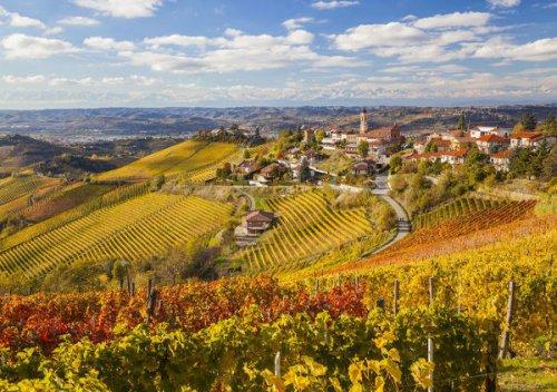 Trebbiano là gì? Hướng dẫn về rượu vang Trebbiano: tất cả những gì bạn cần biết về rượu vang trắng Ý quan trọng nhất